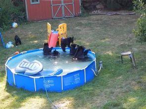 Семейство мечета се охлади в градински басейн