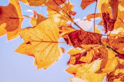 autumn-376.jpg