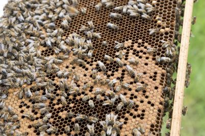 beekeeper-2650662_1280.jpg
