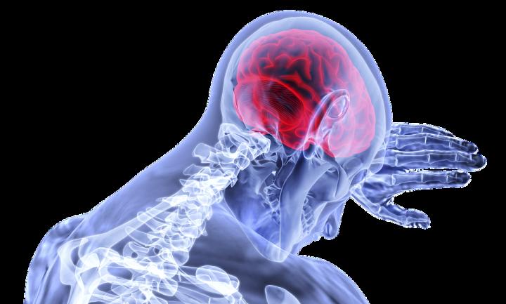 brain-3168269_960_720.png