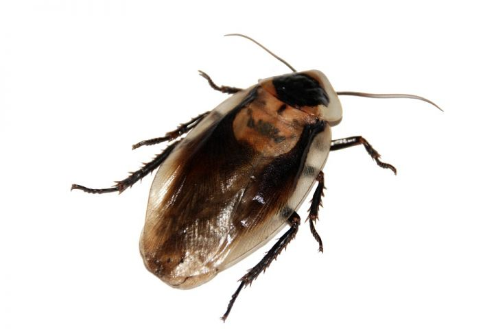 cockroach-566712_960_720.jpg