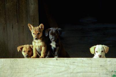 dog-3286094_960_720.jpg