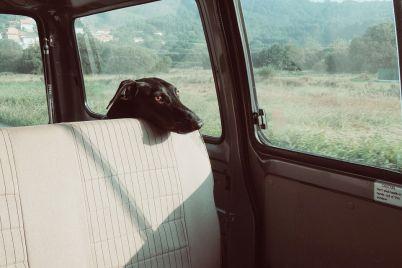 dog-922984_960_720.jpg