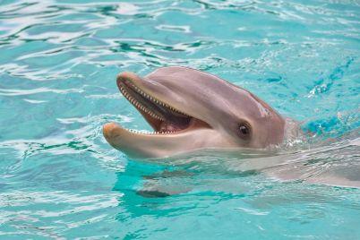 dolphin-3416508_1280.jpg