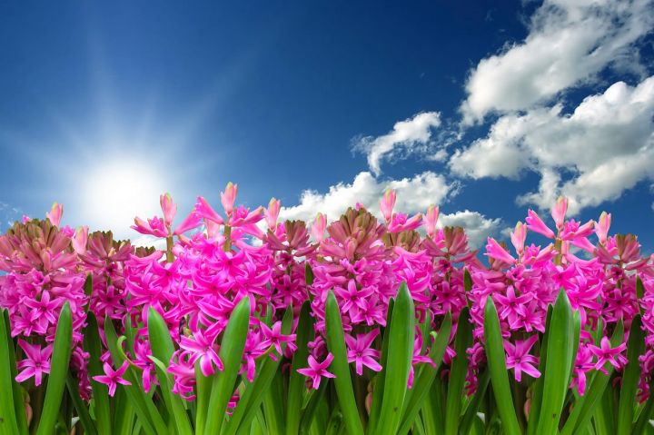 flower-3219718_1280.jpg