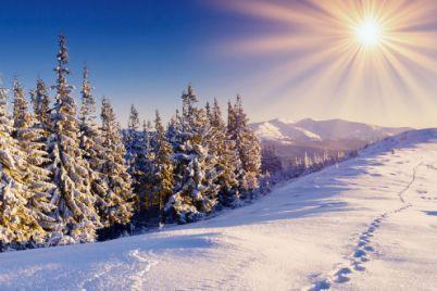 fonds-ecran-foret-hiver-10-660x330.jpg
