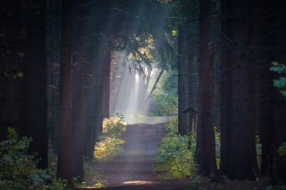 forest-2810434_960_720.jpg