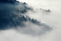 forest-547363_1920.jpg