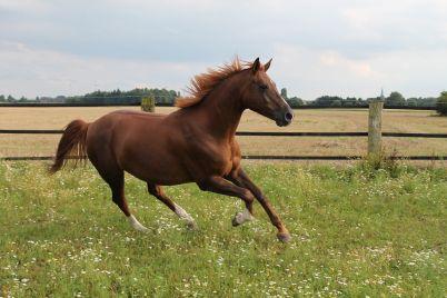horse-2775090_1280.jpg