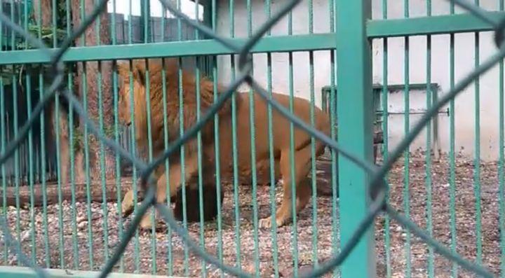 lav_zoopark_rz.jpg