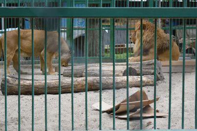 lavove-5.jpg