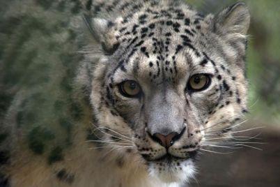 leopard-cnn.jpg