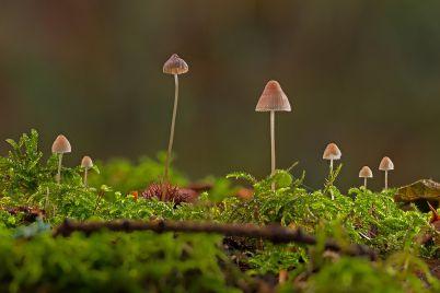 mushrooms-gabi.jpg