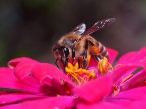 Късната зима и студът застрашават пчелите