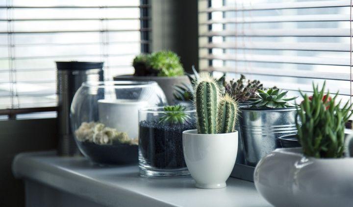 pots-716579_960_720.jpg