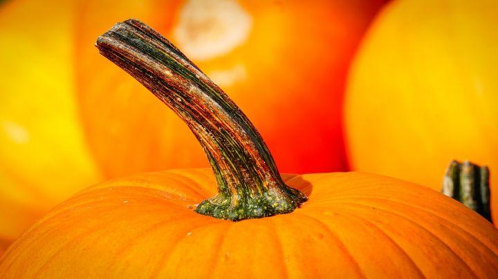 pumpkin-3680048_1280.jpg