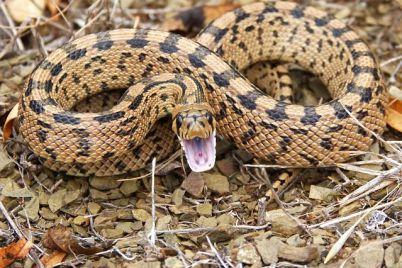 snake-1010085__480.jpg