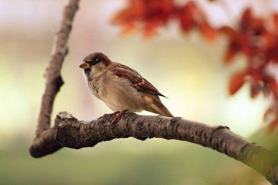 sparrow-9950__480.jpg