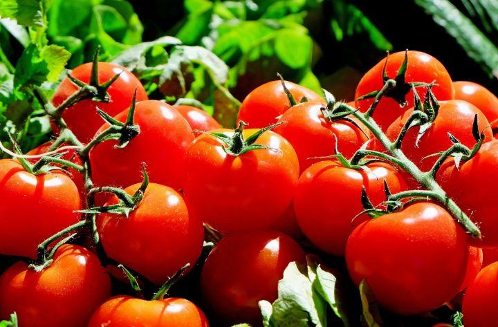 tomatoes-1280859_1280.jpg