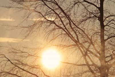 tree-sun.jpg
