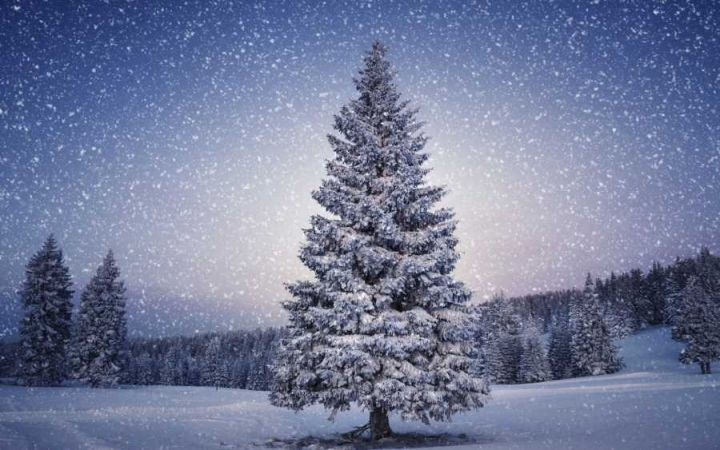 tree_0.jpg