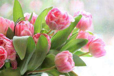tulips-4026273_1920.jpg