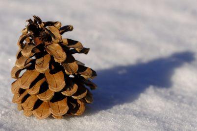 winter-3063944_1920.jpg